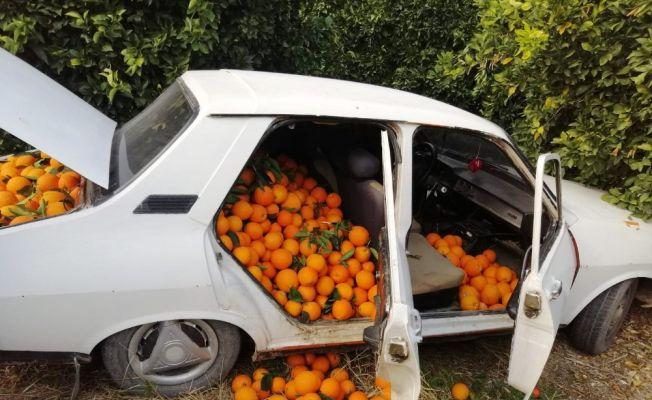 Bir otomobil dolusu portakalı çalamadan kaçtı