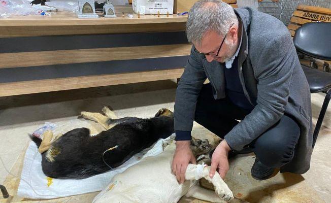 Zehirlenen köpeklere ilk müdahale belediye başkanından