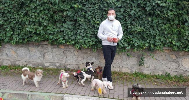 Köpeklerin efendisi