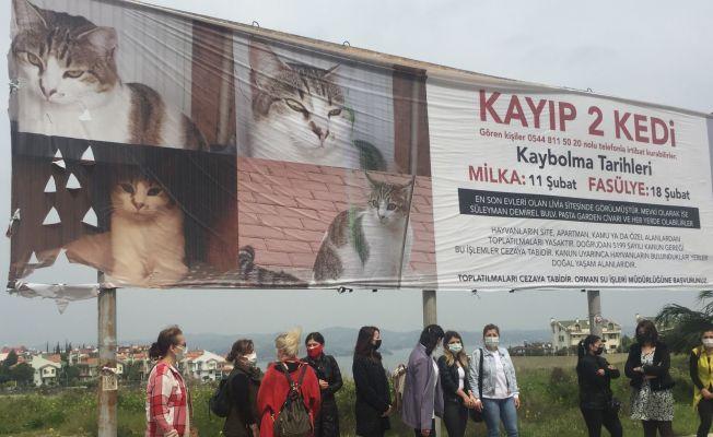 Kaybolan iki kedi için kadınlar seferber oldu