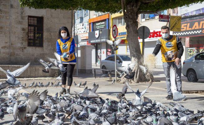 Tam kapanmada sokak hayvanları aç ve susuz kalmayacak