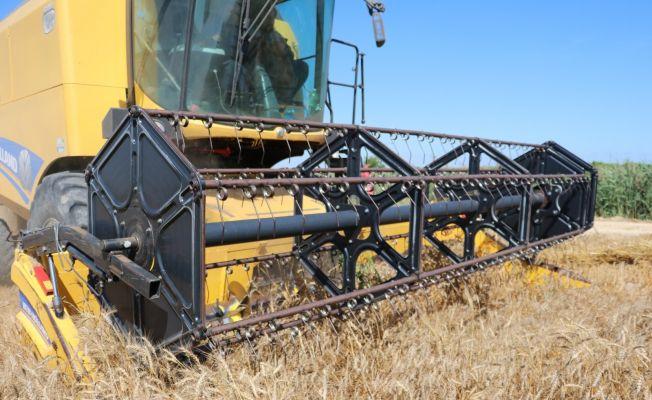 Buğday tarlası olan çiftçi, sünelere karşı uyarıldı