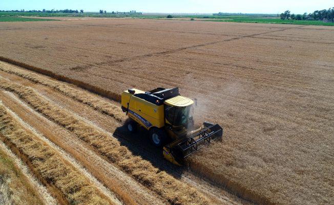 Buğdayda hasat başladı, çiftçinin yüzü gülüyor