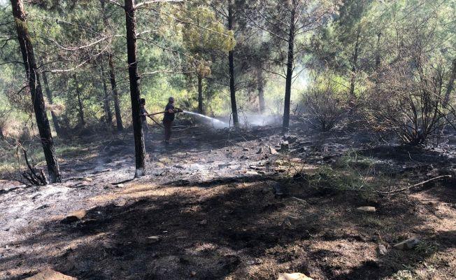 Erken müdahale orman yangının büyümesini engelledi
