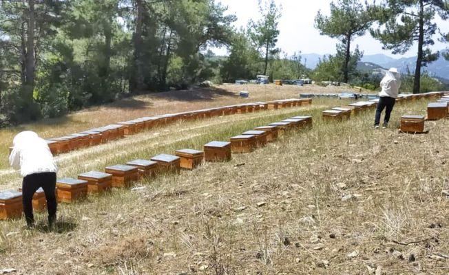 Yangın felaketi yaşayan bal üreticisine kovan desteği