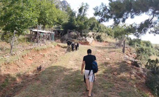 1 haftadır kayıp olan keçiler drone ile bulundu