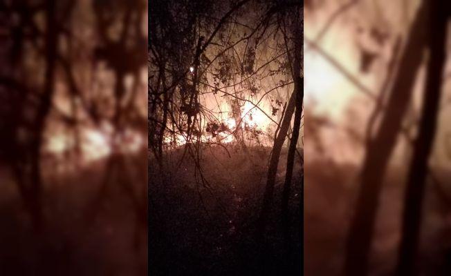 Kozan Tepecikören'de orman yangını