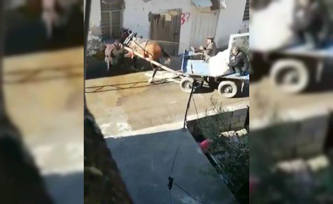 Adana'da pitbull dehşeti