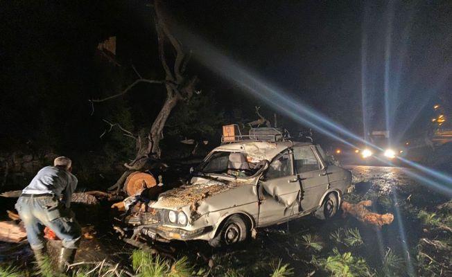 Seyir halindeki otomobilin üzerine ağaç devrildi: 2 yaralı