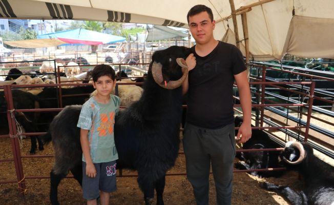 Honamlı Keçileri kurban pazarının gözdesi oldu