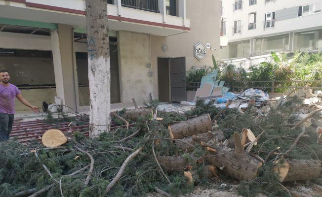 50 yıllık ağaç izinsiz kesildi