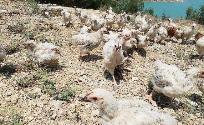 300 civciv devlet korumasına alındı