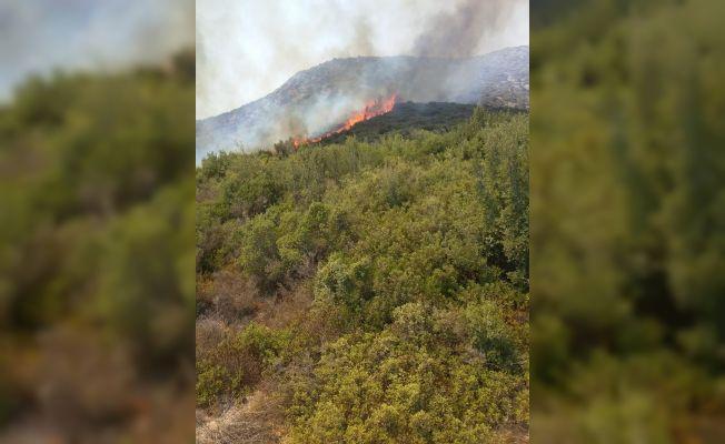 Ceyhan'daki orman yangınına müdahale ediliyor