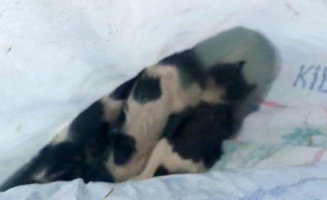 Nehirde bulunan çuvaldan telef olmuş 3 kedi çıktı