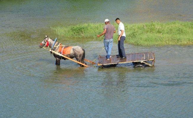 Sıcaktan bunalan atı nehirde serinlettiler