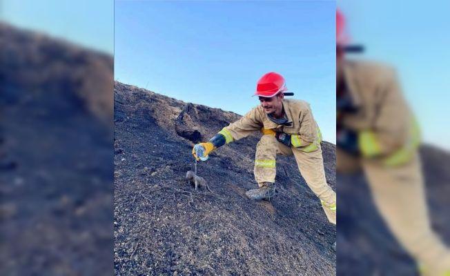 Yangında mahsur kalan sansar yavrularını orman işçileri kurtardı