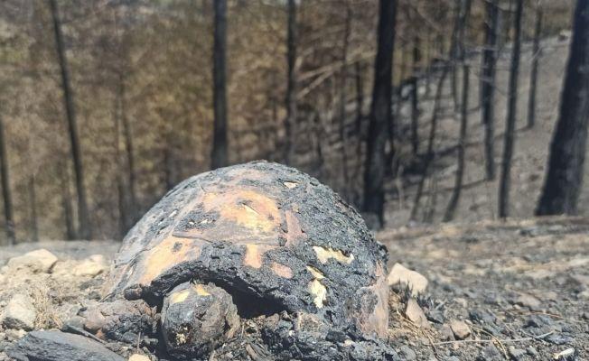 Yangından geriye kalan acı manzara