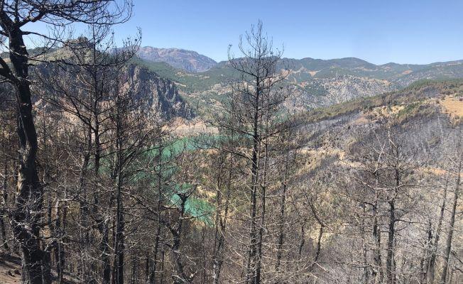 Adana'da 4 bin 150 hektar orman alanı zarar gördü