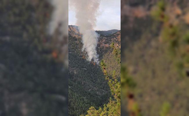 Adana'nın Saimbeyli ilçesinde orman yangını