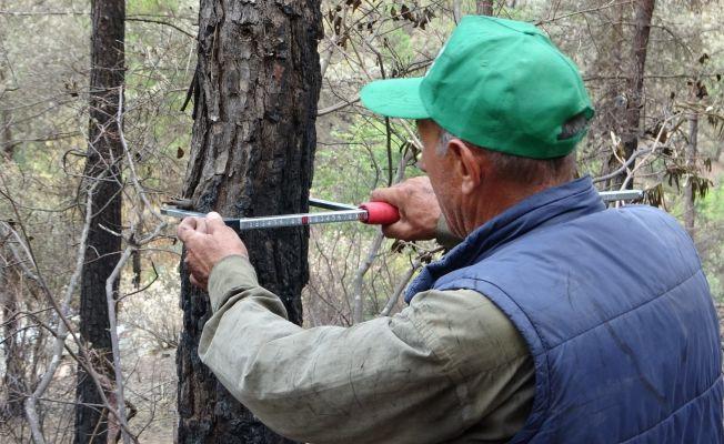 Orman mühendisleri Kozan'da damgalama çalışmalarına başladı