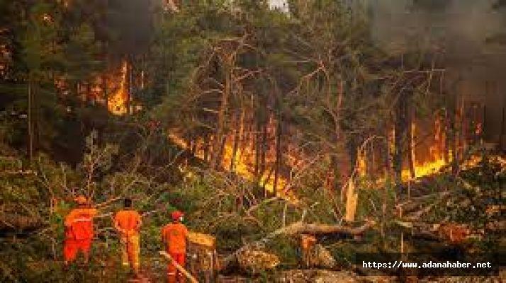 Ormanlık alanlara giriş yasaklandı