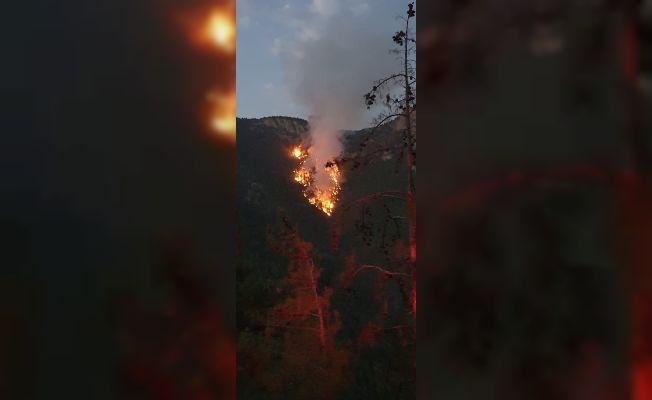 Saimbeyli'de düşen yıldırım 3 kişiyi yaralandı, ormanda yangın çıktı