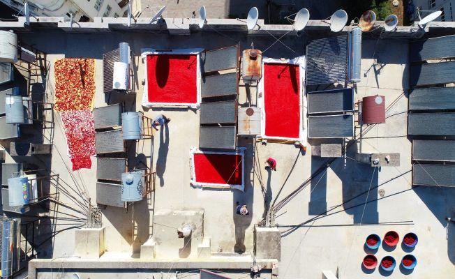 Salça sezonunun başladığı Adana'da damlar kırmızıya boyanıyor