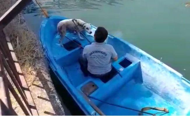 Seyhan nehrinde su giderine sıkışan köpeği büyükşehir ekipleri kurtardı