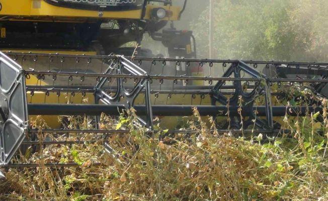 Çukurova'da ikinci ürün mısırın yerini soya aldı